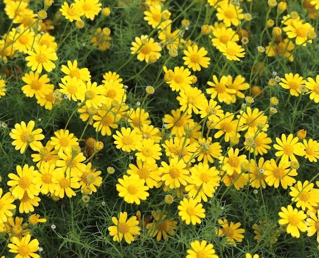 Yellow cosmos flowers field photo premium download yellow cosmos flowers field premium photo mightylinksfo
