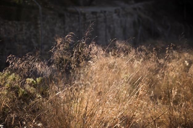 Yellow field grass in sunlight Free Photo