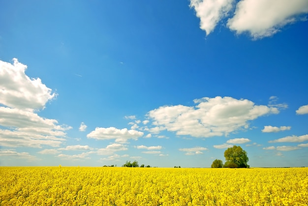 Yellow field with clouds Free Photo