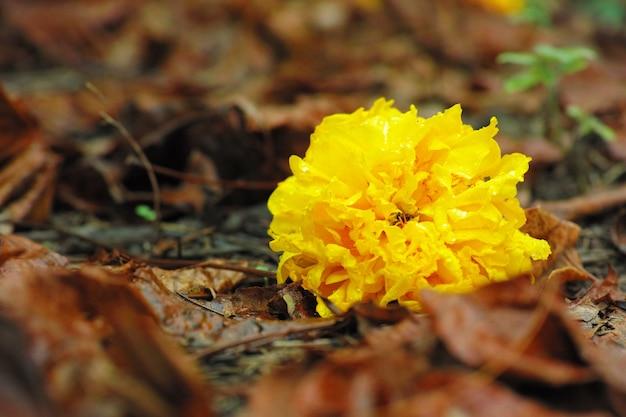 黄色の花乾燥し、床に落ちる花は秋に咲きます。 Premium写真