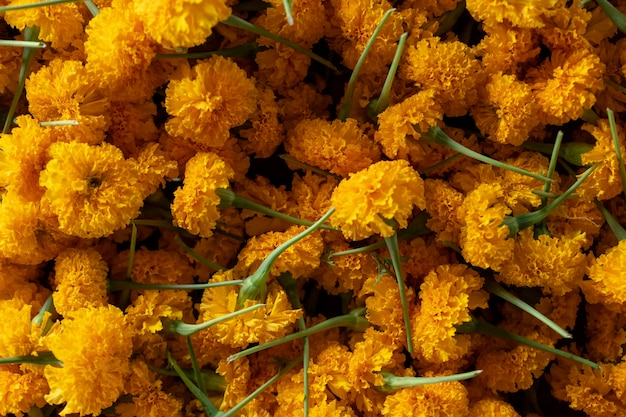 Yellow flower marigold is a symbol of prosperity. thailand's beliefs. Premium Photo