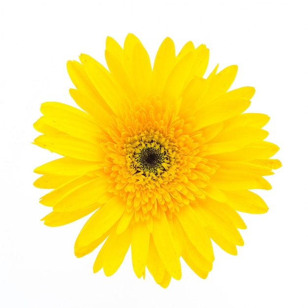 Yellow flower on a white background Free Photo