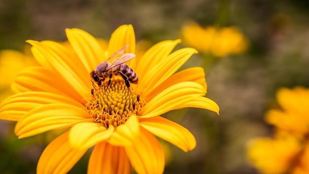 蜂が中にいる黄色い花 Premium写真