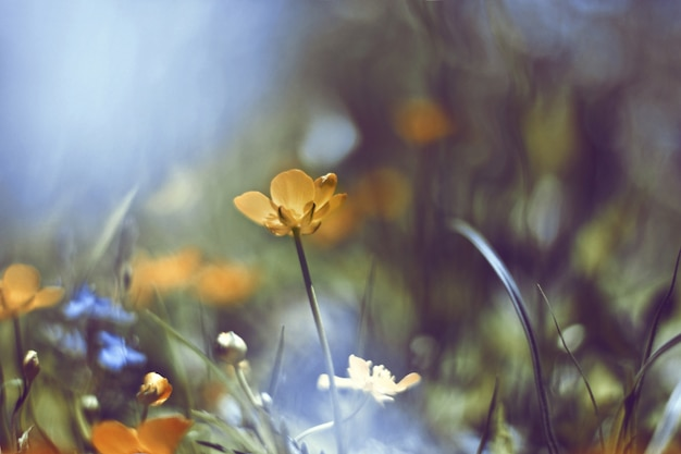 Yellow flower with diffuse background Premium Photo