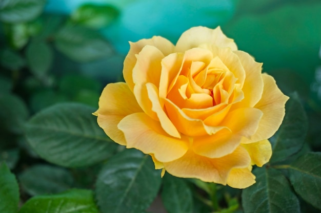 Yellow flower with leaf photo free download yellow flower with leaf free photo mightylinksfo