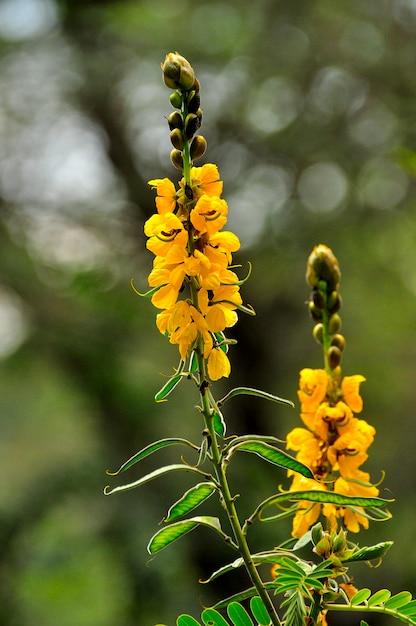 黄色い花 Premium写真