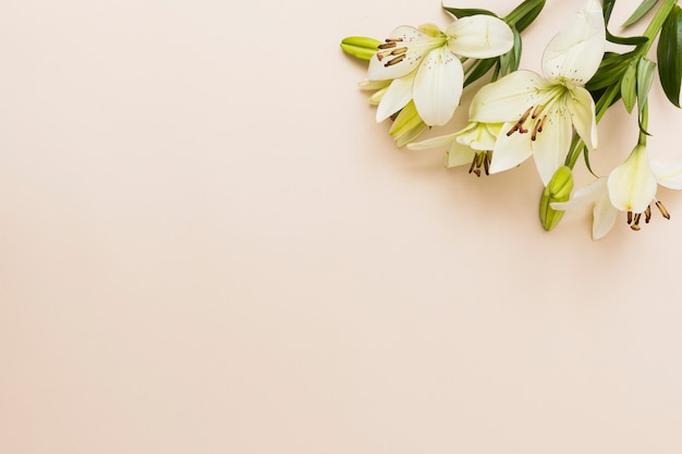 Yellow flowers on beige background Free Photo