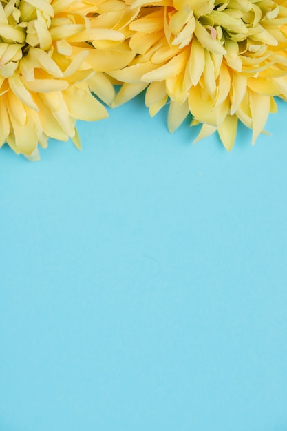 Yellow flowers and blue background with copy space Free Photo