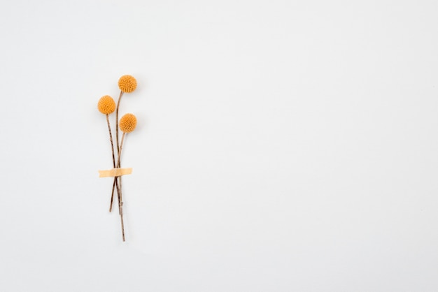 Yellow flowers isolated on yellow background Premium Photo