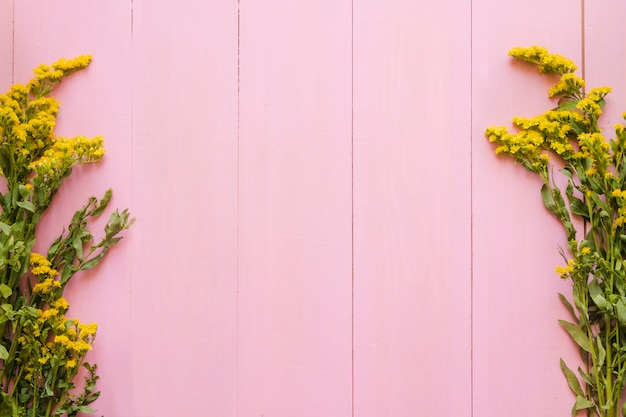 Yellow flowers on pink photo free download yellow flowers on pink free photo mightylinksfo