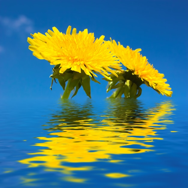 Yellow Flowers In Water Photo Free Download