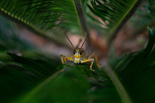 Yellow grasshopper sitting on grass in a garden surrounded by greenery with a blurry background Free Photo