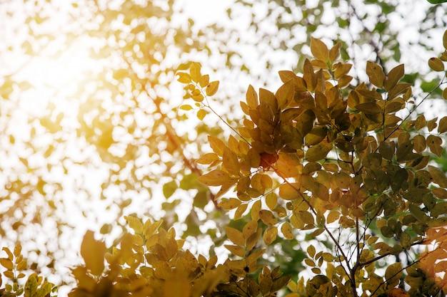 Yellow leaf on tree in autumn season for nature Premium Photo