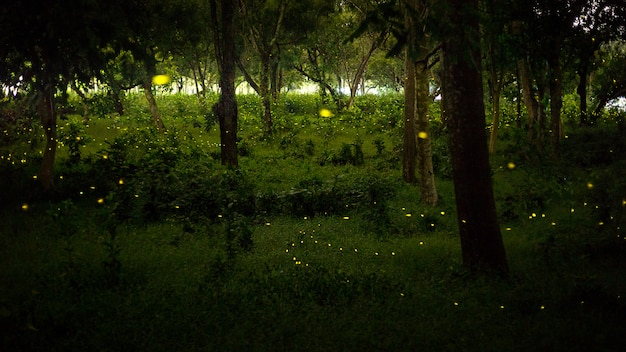Yellow light of firefly fly in nature forest at night after suns Premium Photo
