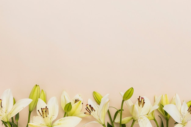 Yellow lilies on beige background Free Photo