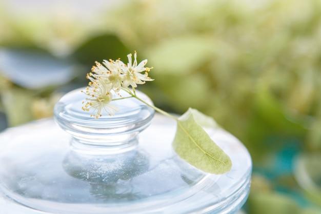 Yellow linden flowers Premium Photo