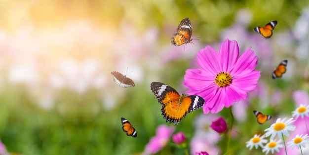 The yellow orange butterfly is on the white pink flowers in the green grass fields Premium Photo
