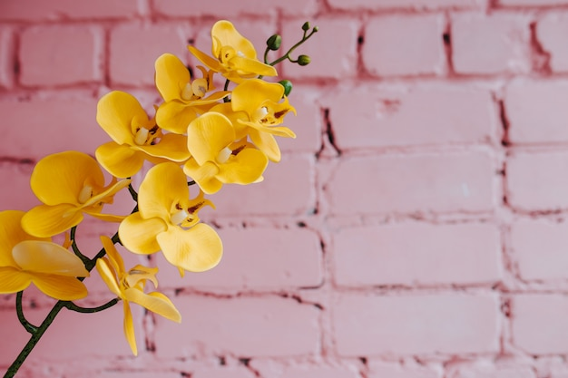 Yellow orchid on pink Premium Photo