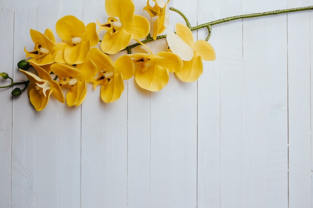 Yellow orchid on the white wood Premium Photo