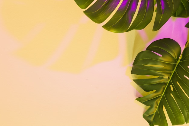 Yellow and pink shadow on monstera leaf over the beige backdrop Free Photo