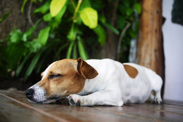 cachorro dorme