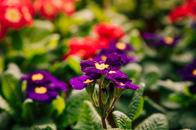 Yellow and purple flowers in the spring season Free Photo