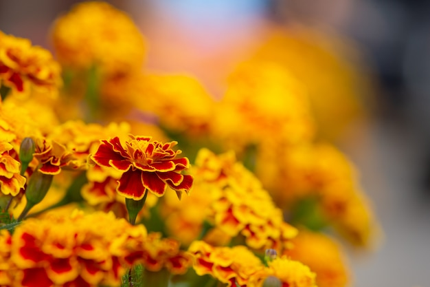 Yellow and red flowers Free Photo