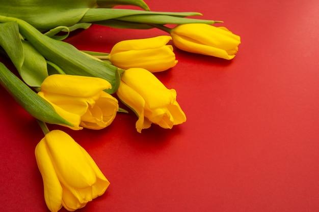 赤い背景の上の黄色のチューリップの花。春を待っています。幸せなイースターカード。フラット横たわっていた、トップビュー。テキストのスペースをコピー Premium写真