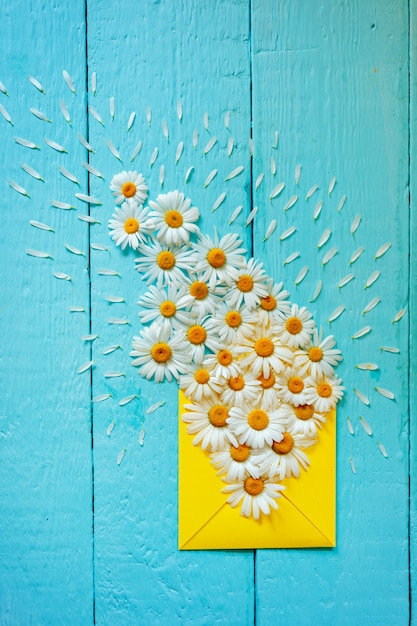 Yellow wenvelope with camomile on blue wooden background. top view. Premium Photo