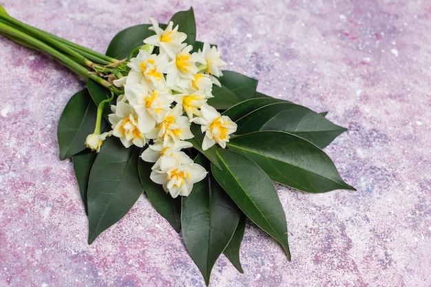 黄色の白い水仙、水仙、ピンクのコンクリートのジョンキル花。 3月8日の女性の日。 Premium写真
