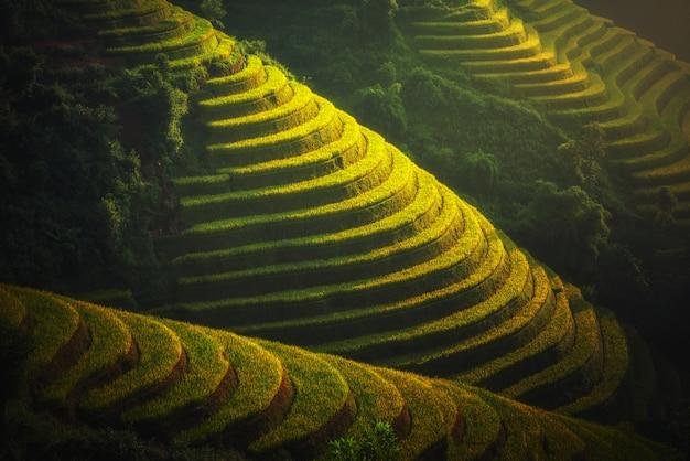ベトナムのyenbai、mu cang chaiのテラスのライスフィールド。 Premium写真