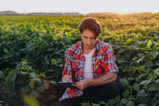 Young agronomist sitting in cornfield taking control of the yield and write a note Premium Photo