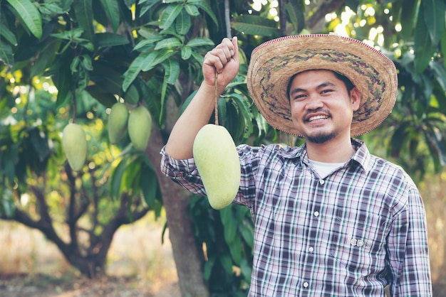 Young asian farmer picking and show mango fruit in organic farm, thailand Premium Photo