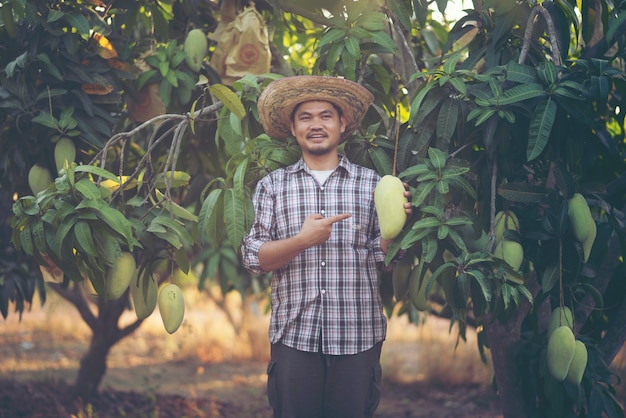 Young asian farmer picking and show mango fruit in organic farm, thailand Premium Photo