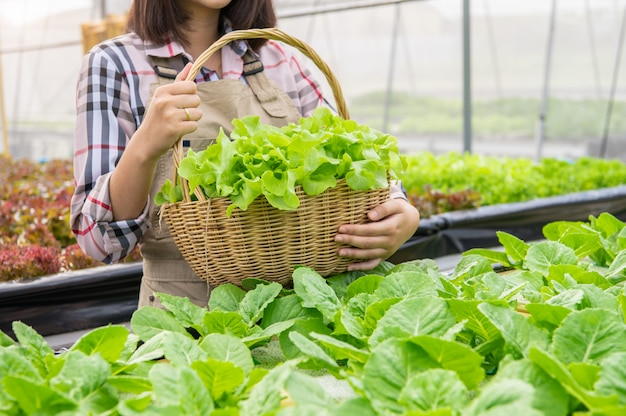 Young asian hydroponics organic farmer collecting vegetables salad into basket Premium Photo