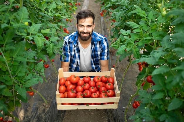 Giovane barbuto lavoratore agricoltore che tiene i pomodori appena raccolti nel giardino Foto Gratuite