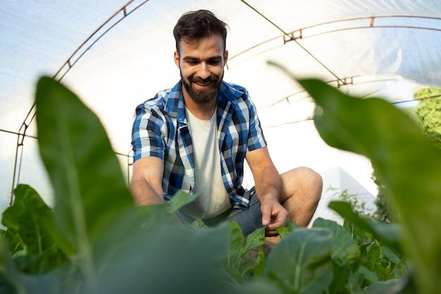Giovane barbuto lavoratore agricoltore toccando le foglie dei raccolti e controllando la qualità delle piante Foto Gratuite