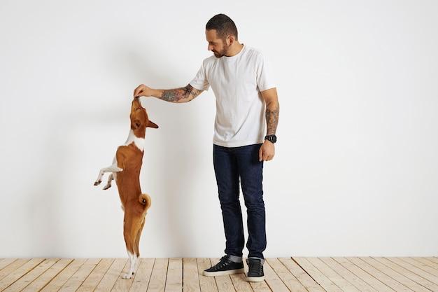 Un giovane cane basenji marrone e bianco è molto alto sulle zampe posteriori mentre il suo proprietario barbuto e tatuato lo motiva offrendogli un bocconcino in alto nell'aria. Foto Gratuite