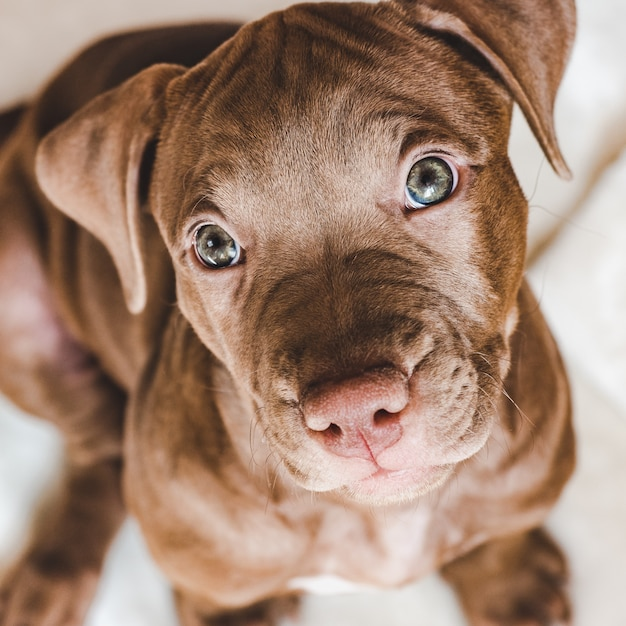 Young, charming puppy. animal care Premium Photo