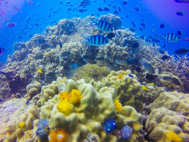 Young coral reef formation on sandy sea bottom Free Photo