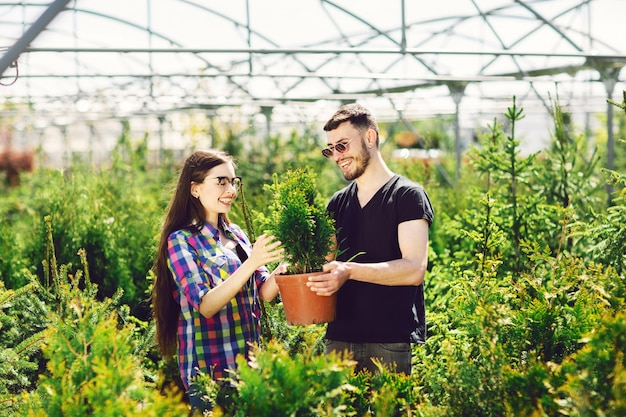 Young couple standing together, holding a pot with a small fir tree and looking at a plant Premium Photo
