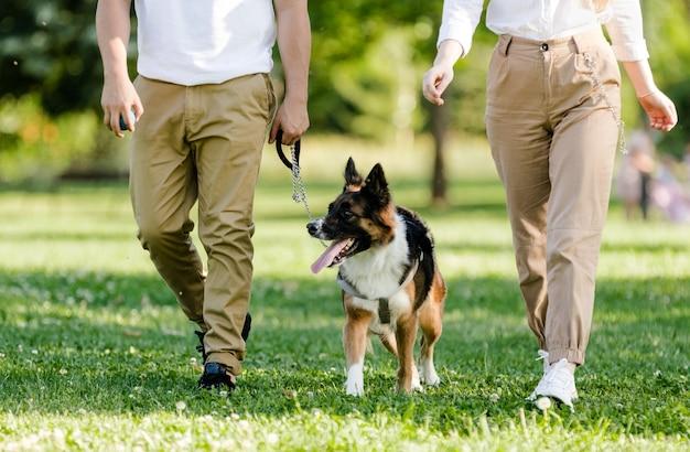 公園で犬ボーダーコリーと歩く若いカップル Premium写真