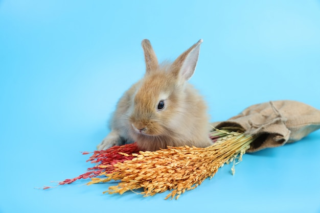 Young cute brown easter bunny rabbit with colorful grass Premium Photo