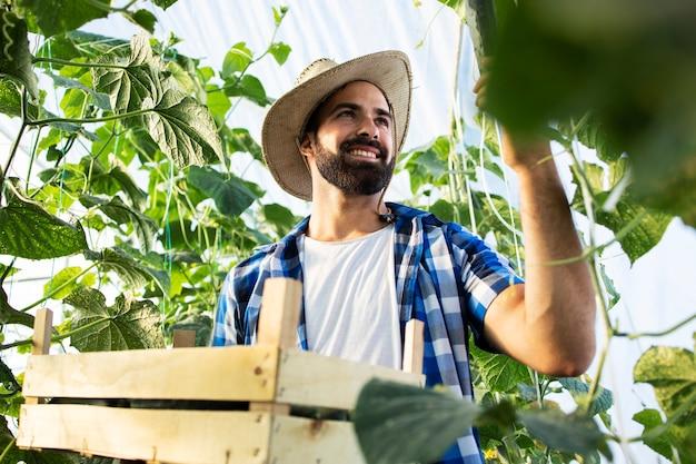 Giovane imprenditore contadino che coltiva e produce ortaggi biologici freschi Foto Gratuite