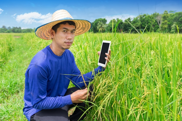 Young farmer holding smartphone tablet in rice field. seasonal agricultural works Premium Photo