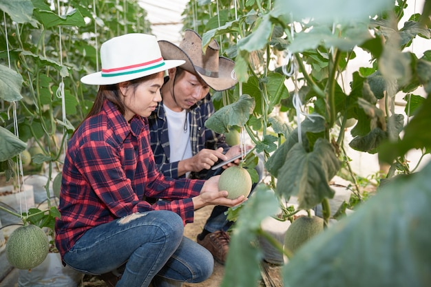 Young farmers are analyzing the growth of melon effects on greenhouse farms Free Photo
