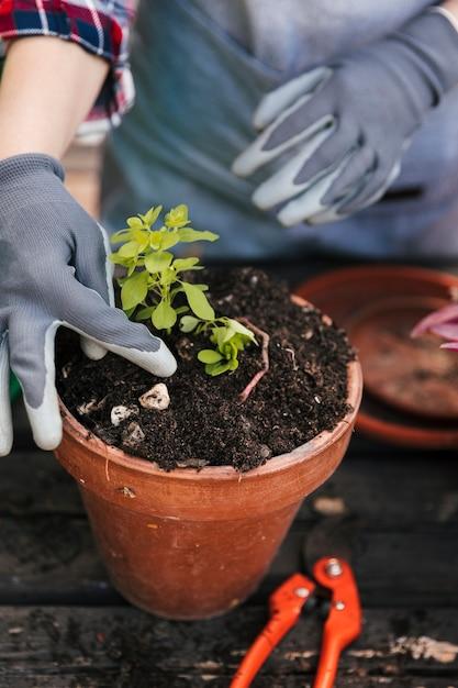 赤い鍋に苗を植える手袋を身に着けている若い女性庭師 無料写真