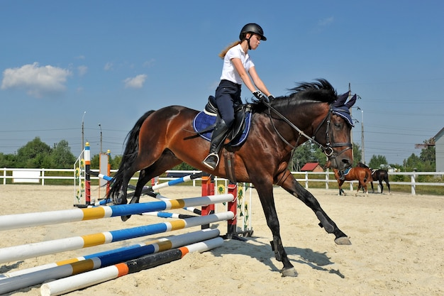 Young girl on her bay horse jumps over a barrier on training. Premium Photo