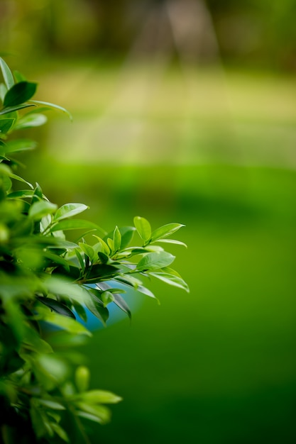 Young green leafy shoots of leaves beautiful, beautiful natural concept Premium Photo