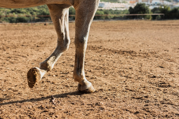Young horse walking on the farm Free Photo